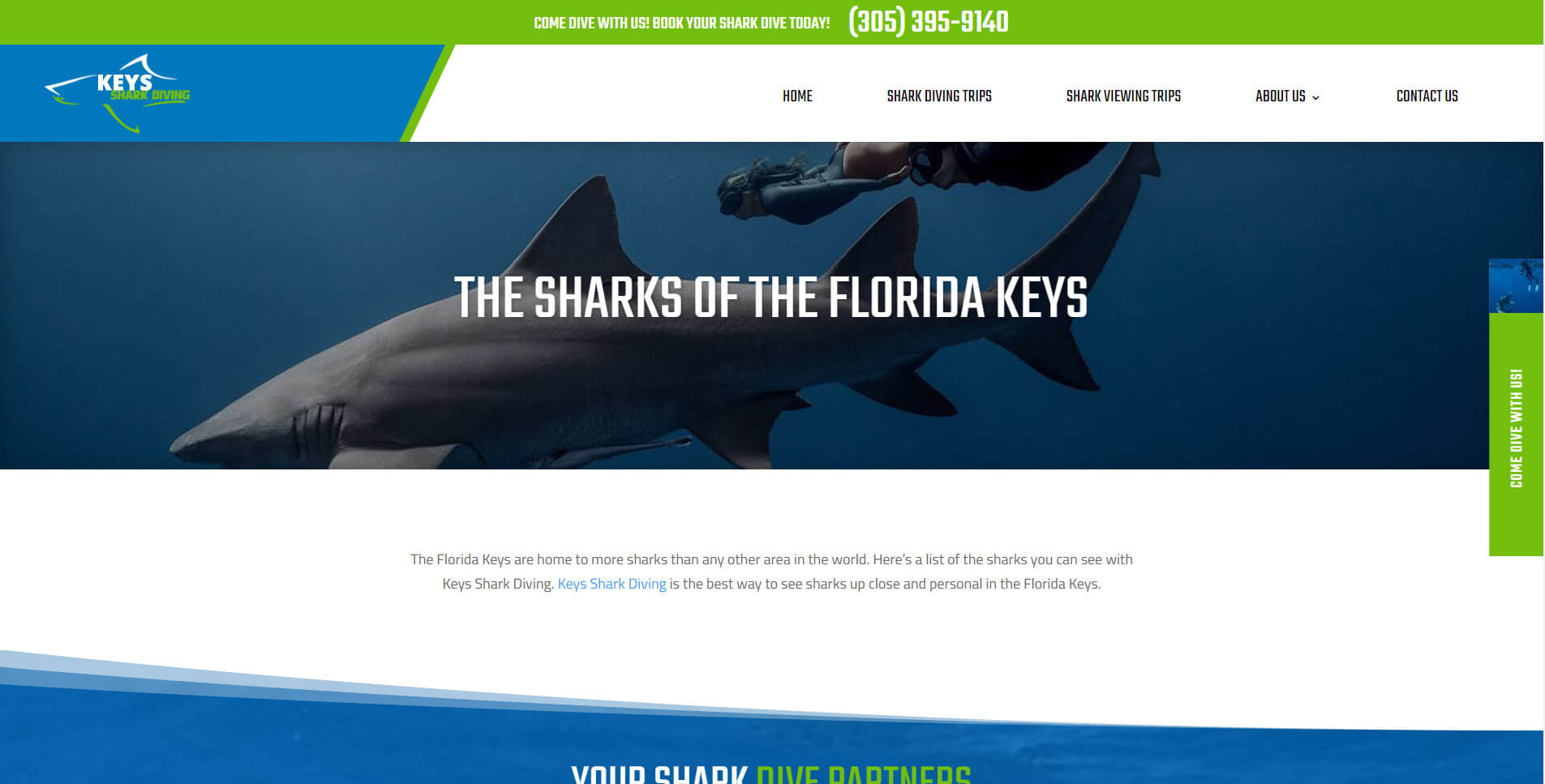 An image of the meet the sharks page of Keys Shark Diving, website created by Not Fade Away Marketing